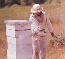 dick-beekeeping