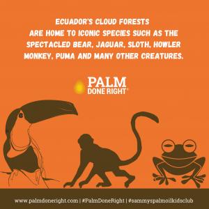 Ecuador's cloud forests